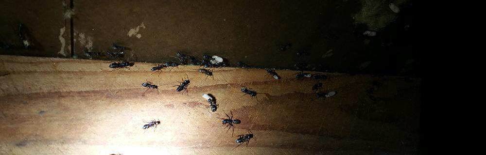 Pest Control One
