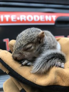 baby squirrels are precious but