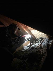 Opossum in the attic