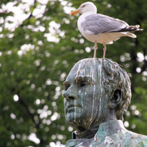 bird-droppings-on-statue