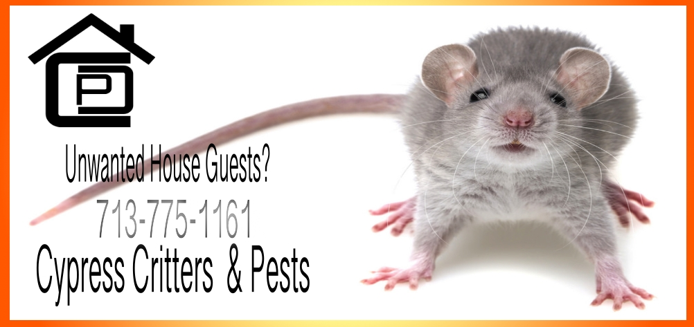 Pest Control Service Houston | Animal Control Service